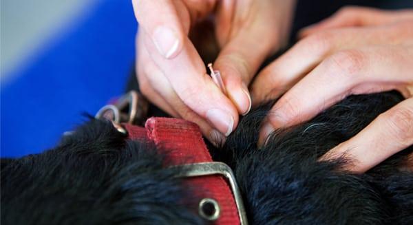 Acupuncture Snapshot